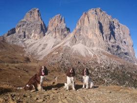 Bergspringer vor dem Langkofel